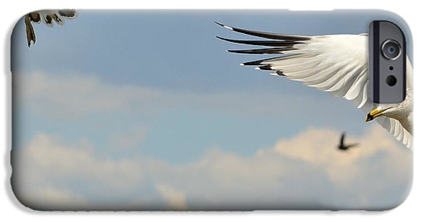 Seagull iPhone Cases - Disconnect iPhone Case by Fraida Gutovich