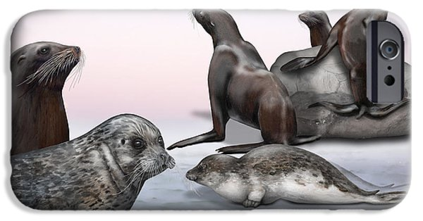 North Sea Drawings iPhone Cases - Distinguishing Marks - Eared seals Otariidae and Earless Seals Phocidae - Zoo Interpretiation Panels iPhone Case by Urft Valley Art
