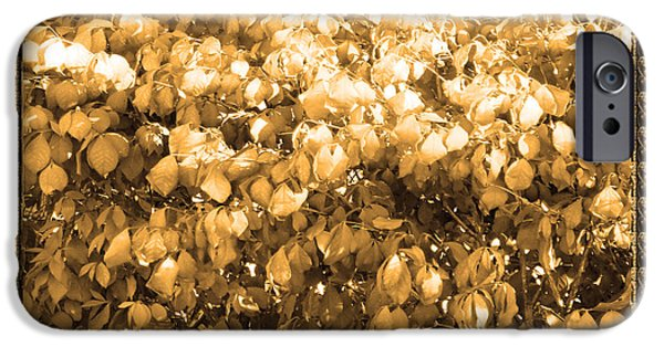 Miracle iPhone Cases - Diva Gold Collection Flowers Exquisite double color border energy filled sparkle decorative art iPhone Case by Navin Joshi