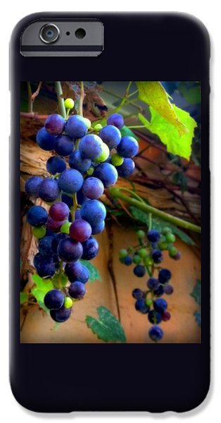 Concord iPhone Cases - Divine Perfection iPhone Case by Karen Wiles