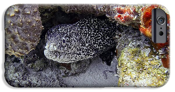 Creepy iPhone Cases - Diving In Puerto Morelos - A Moray Eel iPhone Case by For Ninety One Days