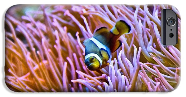 Clown Fish Photographs iPhone Cases - Do I Look Like A Clown To You iPhone Case by Angelina Vick