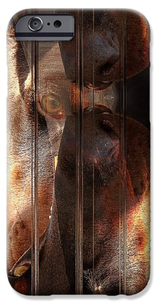 Purebred Digital Art iPhone Cases - Doberman Pincher iPhone Case by Liane Wright
