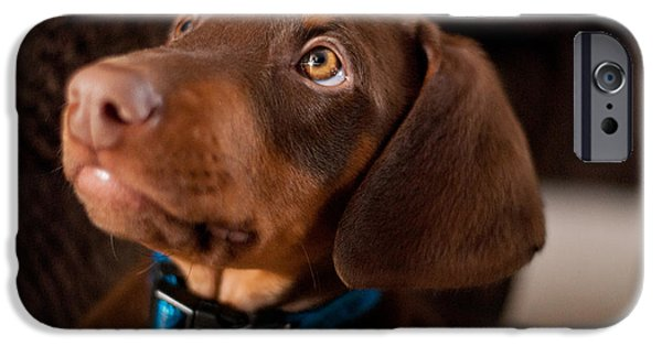 Doberman Pinscher Puppy iPhone Cases - Doberman Puppy iPhone Case by Cynthia Stephens