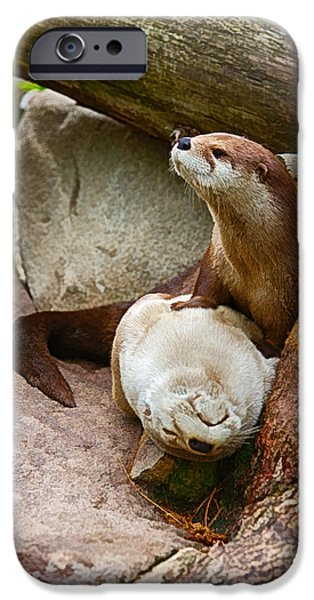 Otter Digital Art iPhone Cases - Doctor Otter at the Western North Carolina Nature Center iPhone Case by John Haldane