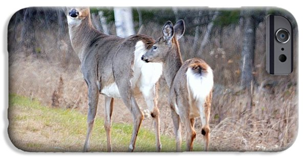Maine iPhone Cases - Doe and Fawn iPhone Case by Lena Hatch