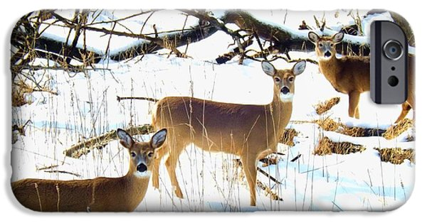 Wintertime iPhone Cases - Does In The Snow iPhone Case by Robyn King