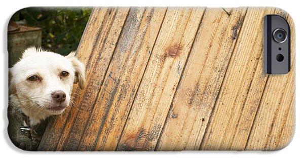 Doghouse iPhone Cases - Dog iPhone Case by Aleksandar Mijatovic