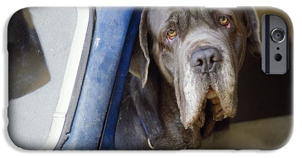 Dog Close-up iPhone Cases - Dog In Car iPhone Case by Frederic Rolland