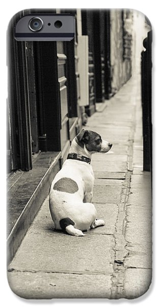 Dog Photography iPhone Cases - Dog in Paris iPhone Case by Diane Diederich