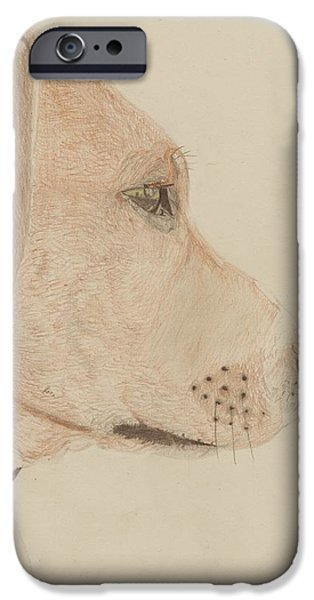 Pet iPhone Cases - Dog in profile iPhone Case by David Smith