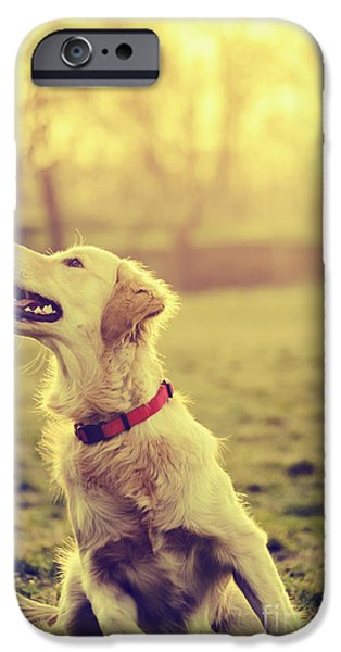 Dog in the park iPhone Case by Jelena Jovanovic