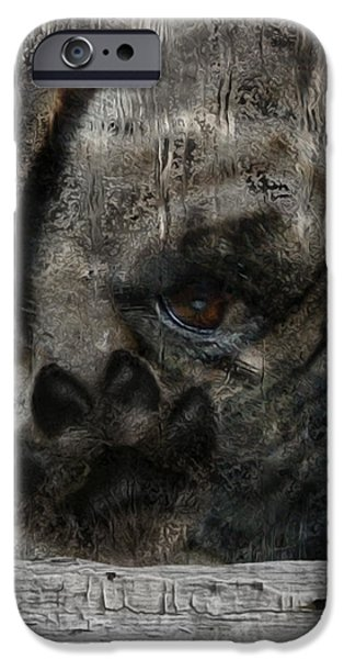 Rainy Day iPhone Cases - Dog In The Window iPhone Case by Jack Zulli