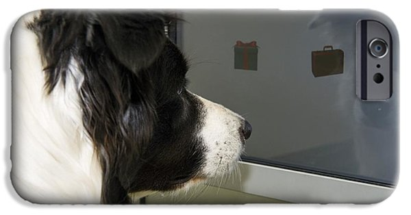 Nature Study iPhone Cases - Dog Intelligence Research iPhone Case by Louise Murray