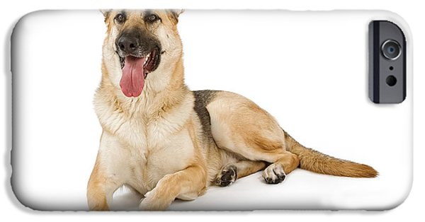 Police Dog iPhone Cases - Dog Isolated on White iPhone Case by Susan  Schmitz