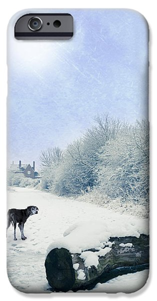 Dog Walking iPhone Cases - Dog Looking Back iPhone Case by Amanda And Christopher Elwell