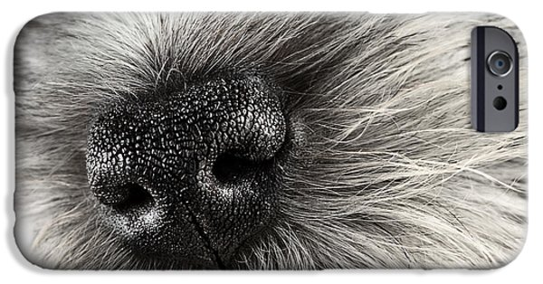 Cute Schnauzer iPhone Cases - Dog Nose  iPhone Case by Stephanie Frey