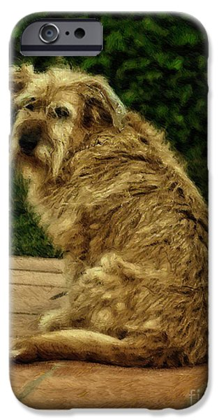 Dogs Digital Art iPhone Cases - Dog on a Terrace - digital oil iPhone Case by Mary Machare