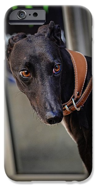 Black Dog Photographs iPhone Cases - Dog on the Street iPhone Case by Mary Machare