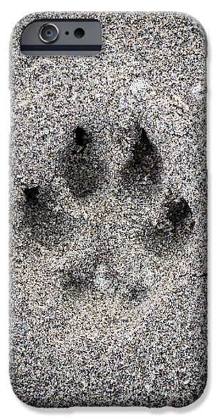 Print Photographs iPhone Cases - Dog paw print in sand iPhone Case by Elena Elisseeva