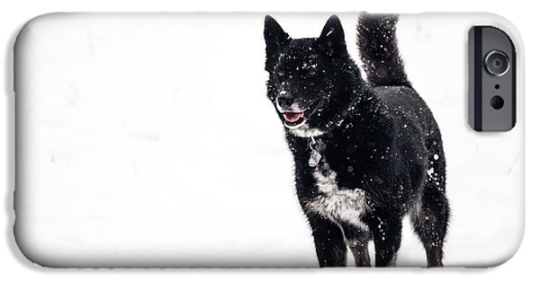 Husky iPhone Cases - Abbey plays in the snow iPhone Case by Helix Games Photography