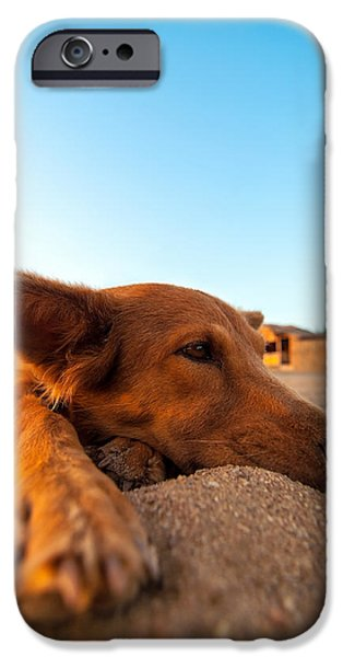 Lazy Dog iPhone Cases - Dog Relaxing on a Beach iPhone Case by Jess Kraft