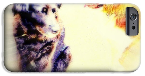 Sun Breakthrough iPhone Cases - Dog Romance iPhone Case by Hilde Widerberg