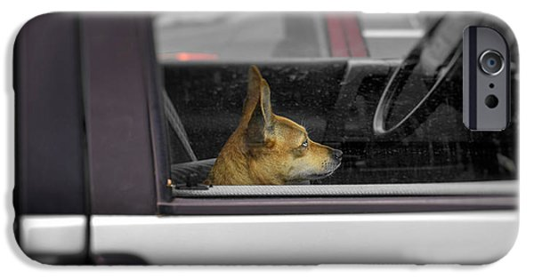 Dog Photography iPhone Cases - Dog Sitting On Passenger Seat In A Car iPhone Case by Panoramic Images