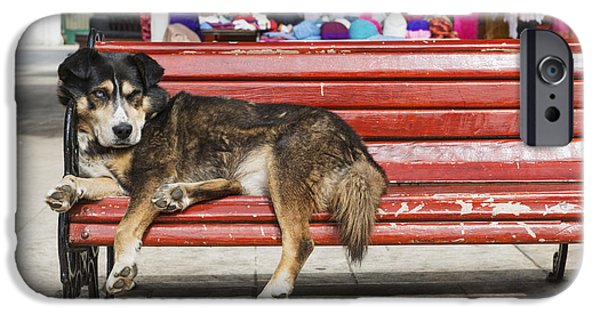 Lazy Red Dog iPhone Cases - Dog Sleeping On A Red Bench Punta iPhone Case by Remsberg Inc