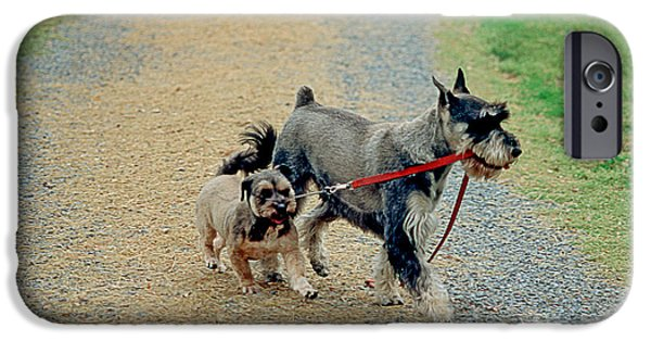 Cute Schnauzer iPhone Cases - Dog Walks Dog iPhone Case by James L. Amos