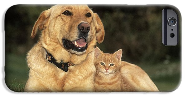Mixed Labrador Retriever iPhone Cases - Dog With Kitten iPhone Case by Rolf Kopfle