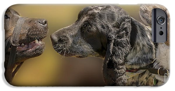 Dog Close-up iPhone Cases - Doggie Gossip iPhone Case by Linsey Williams