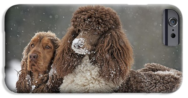 Dog In Snow iPhone Cases - Dogs In Snow iPhone Case by Johan De Meester