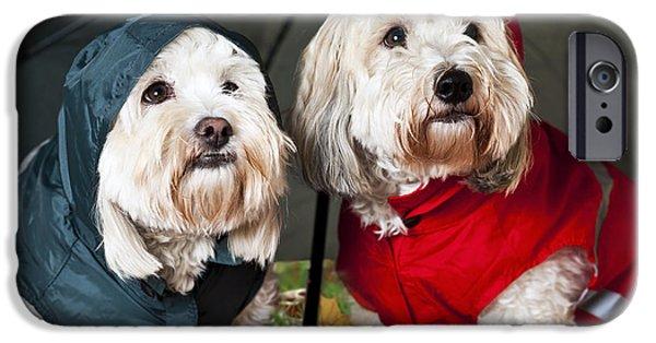 Couple iPhone Cases - Dogs under umbrella iPhone Case by Elena Elisseeva