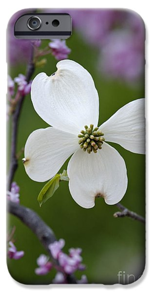 Indiana Flowers iPhone Cases - Dogwood and Redbud - D008979 iPhone Case by Daniel Dempster