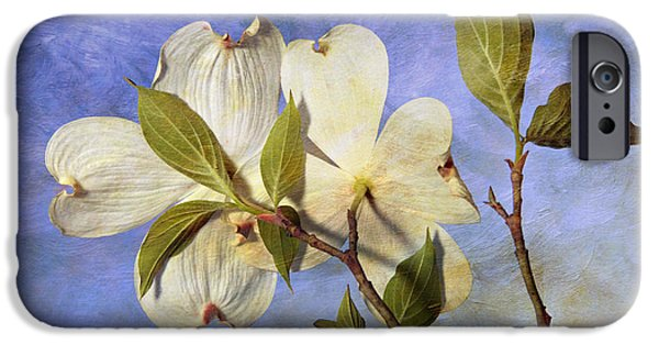 Indiana Springs iPhone Cases - Dogwood Blossoms and Blue Sky - D007963-b iPhone Case by Daniel Dempster