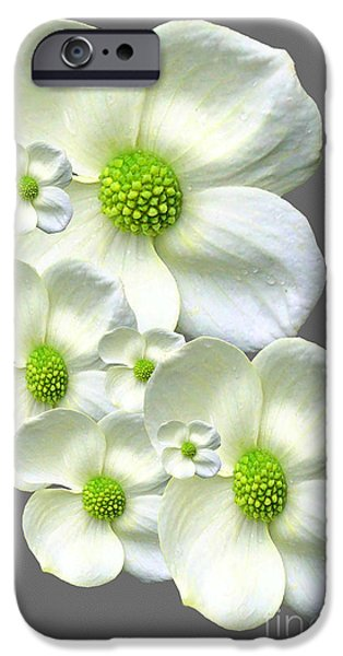 Multimedia iPhone Cases - Dogwood Groupings iPhone Case by Tina M Wenger