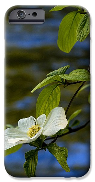 Bill Gallagher iPhone Cases - Dogwood on the Merced iPhone Case by Bill Gallagher