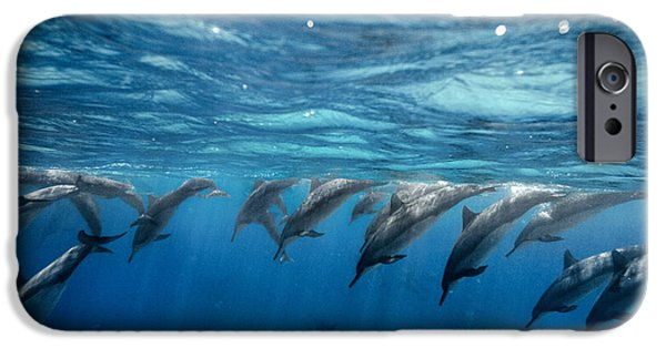 Porpoise iPhone Cases - Dolphin Dive iPhone Case by Sean Davey