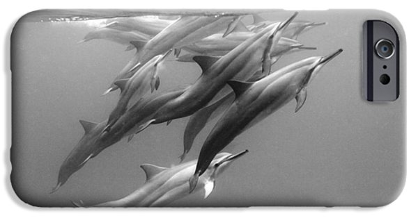 Ocean Art Photography iPhone Cases - Dolphin Pod iPhone Case by Sean Davey