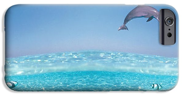Dolphin iPhone Cases - Dolphins Leaping In Air iPhone Case by Panoramic Images