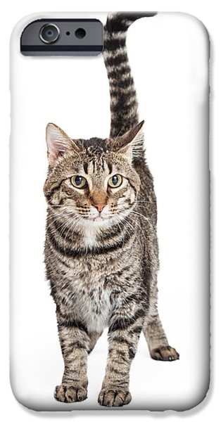 Domestic Animal iPhone Cases - Domestic Shorthair Tabby Cat Standing iPhone Case by Susan  Schmitz
