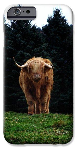 Yak Digital Art iPhone Cases - Domesticated Yak  iPhone Case by Lj Lambert