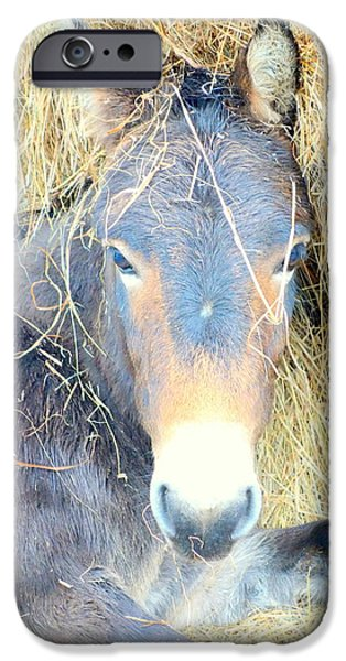 Norway iPhone Cases - Donkey Dinner iPhone Case by Hilde Widerberg