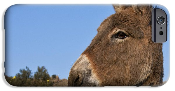 Donkey iPhone Cases - Donkey In Greece iPhone Case by Jean-Louis Klein and Marie-Luce Hubert