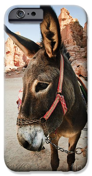 Jordan Pyrography iPhone Cases - Donkey iPhone Case by Jelena Jovanovic