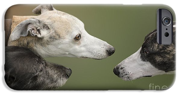 Dog Close-up iPhone Cases - Dont Be So Nosy iPhone Case by Linsey Williams