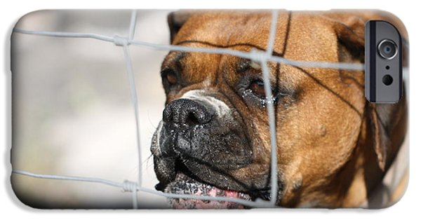 Boxer iPhone Cases - Dont Fence Me In iPhone Case by Terry Fleckney