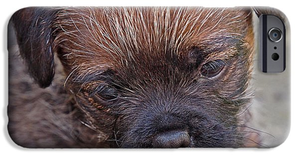Cute Puppy iPhone Cases - Dont Leave Me - Border Terrier Pupppy iPhone Case by Gill Billington