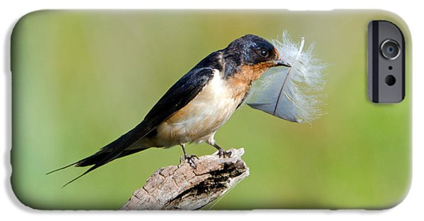 Barn Swallow Digital Art iPhone Cases - Birds Of A Feather... iPhone Case by Stephen Flint